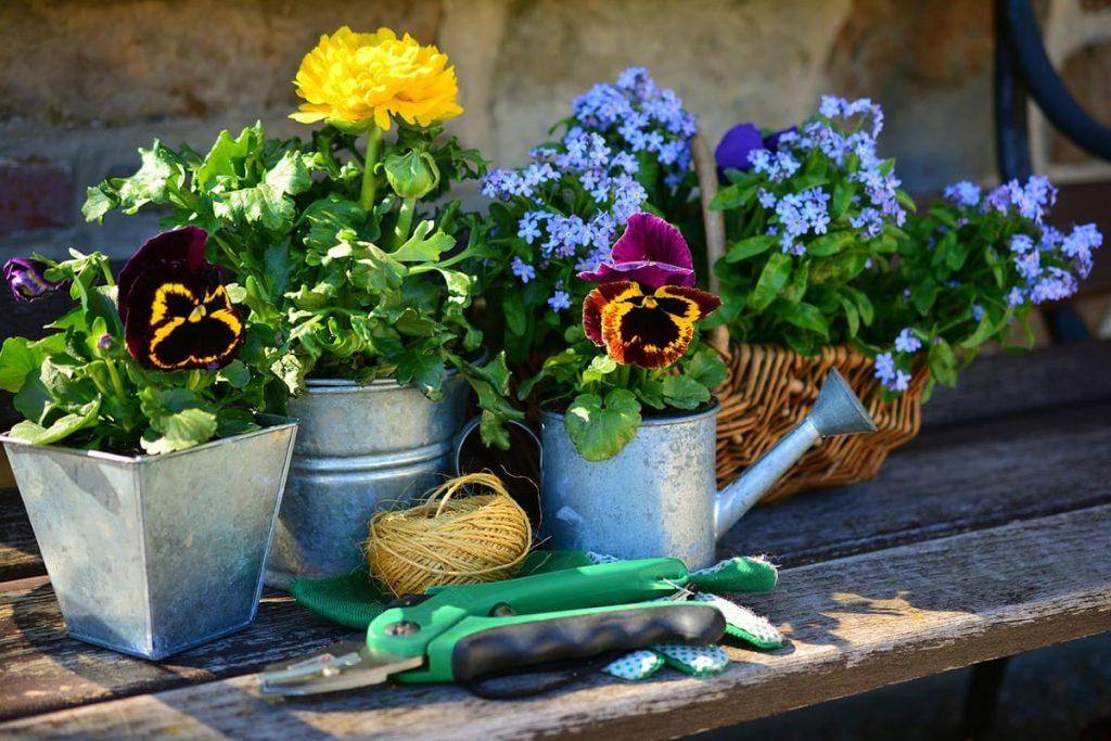 Mit ein paar praktischen Tipps für den Garten ist die Auswahl der richtigen Pflanzen ein Kinderspiel.