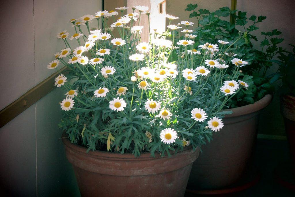 Mit ein paar Tipps für den Garten und Balkon lässt sich auch eigenes Obst und Gemüse ganz einfach anbauen.
