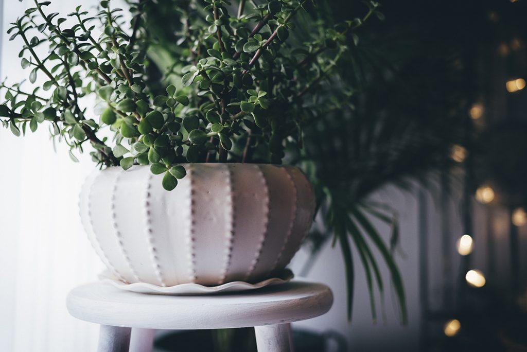 Auch Pflanzen in der Wohnung tragen zu einer entspannenden Atmosphäre bei.
