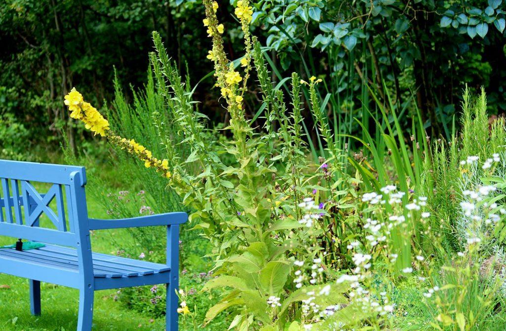 Zahlreiche Tipps für den Garten berücksichtigen auch den Gartenteich.