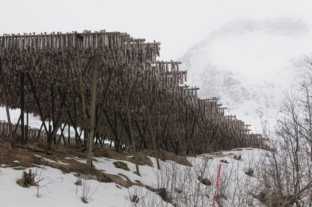 Stockfisch, Trockenfisch, Gestell, Norwegen, Klima