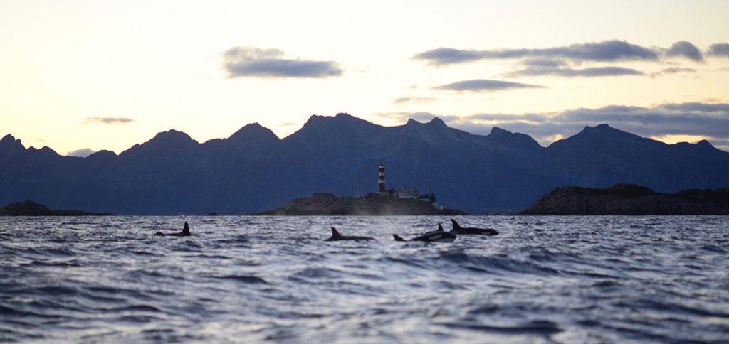 Der Eishai - einer der seltsamsten Kreaturen des Meeres.