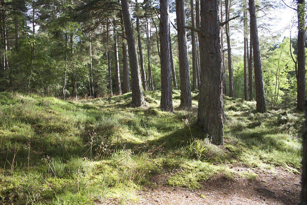 Wald_Norwegen_Sommer_Natur_Licht_Baeume