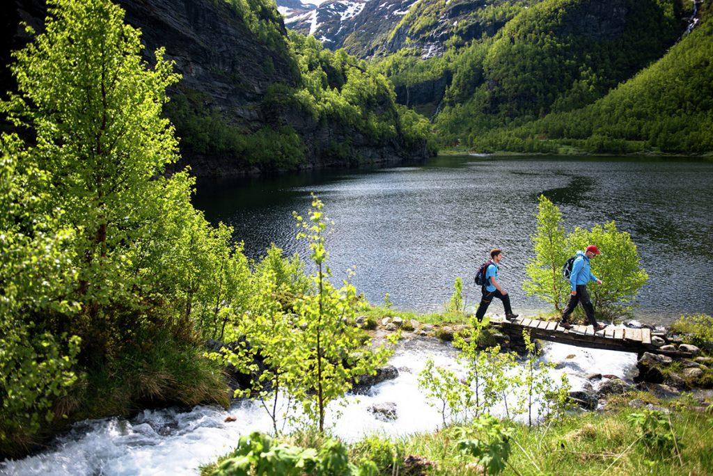 Wald_Norwegen_Wandern_Sommer_Natur