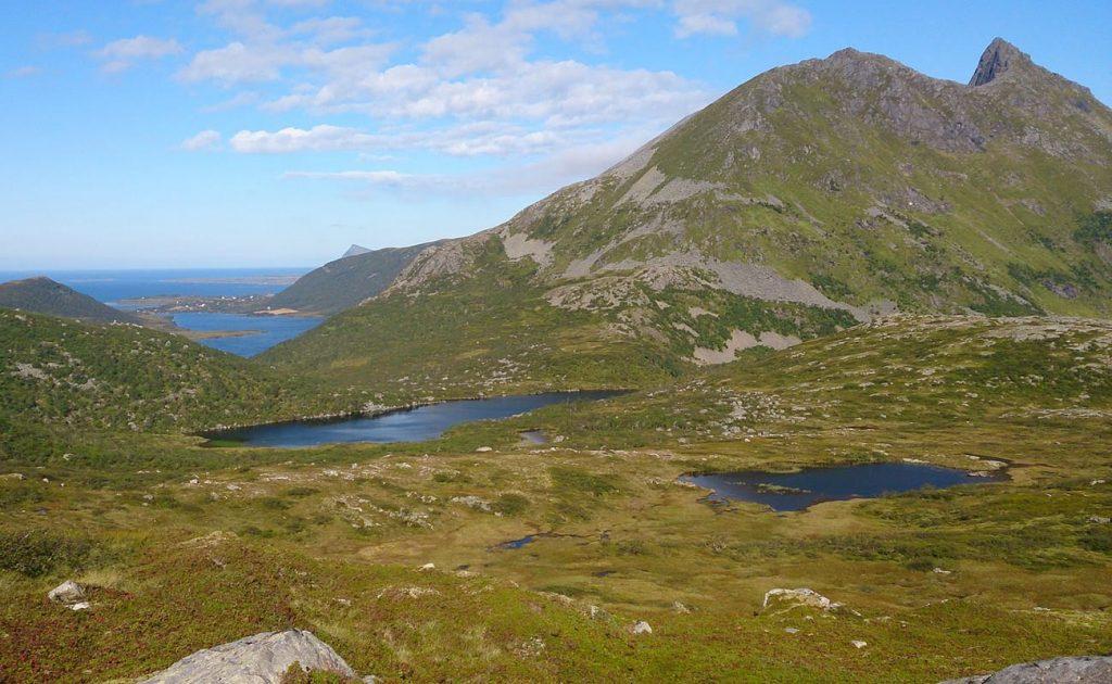 Für das Sammeln der Moltebeere gibt es in Norwegen gesetzliche Regelungen.