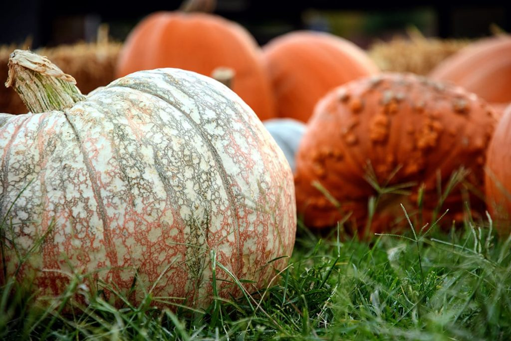 Auch in Norwegen, dem Heimatland von Stressless, ist es Tradition, einen Kürbis als Halloween-Deko zu schnitzen.
