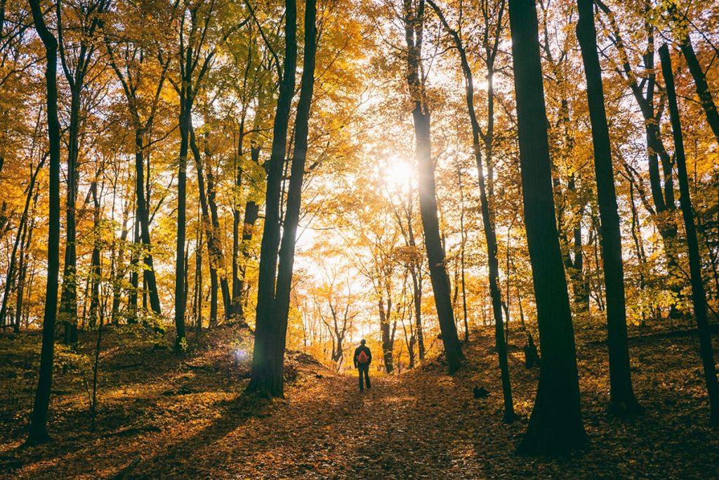 Bei einem Herbstspaziergang im Wald tut ihr zugleich etwas für eure Gesundheit und die Entspannung.
