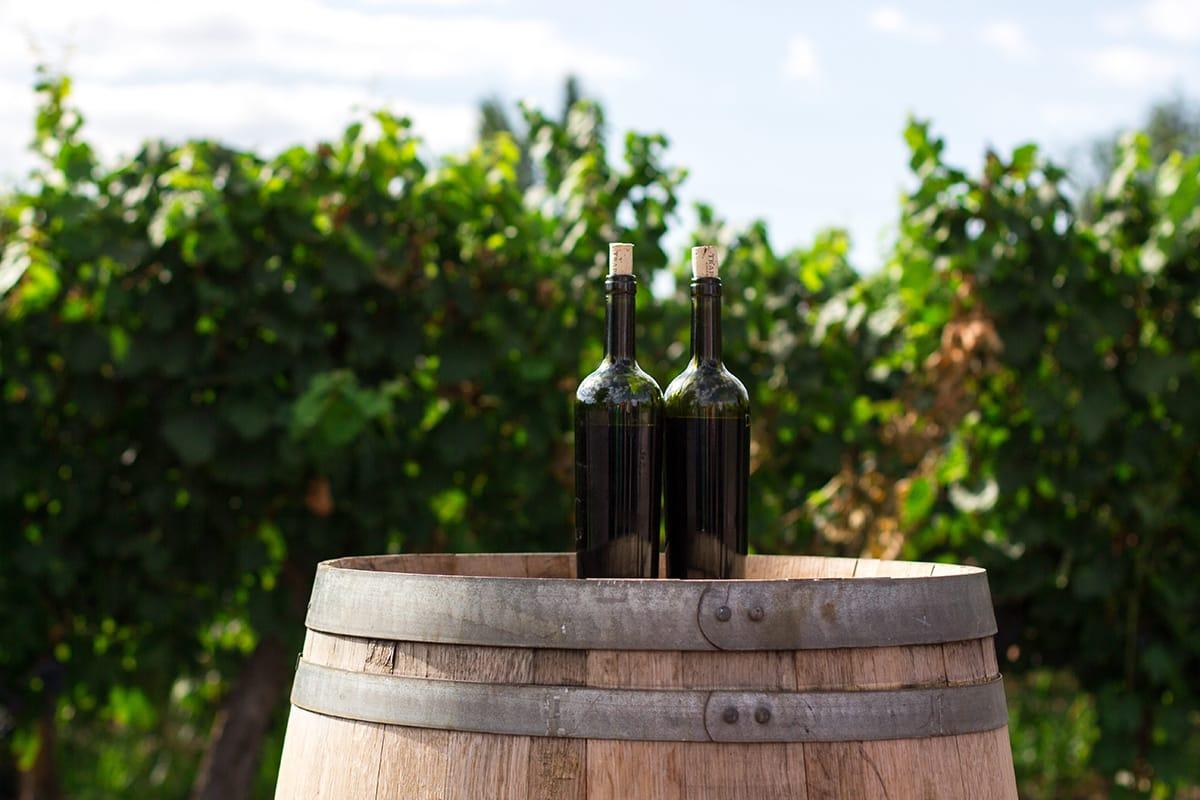 Auch Weintouren gehören zu den Urlaubsarten, bei denen sich Hinzulernen und Reisen gut miteinander kombinieren lassen.
